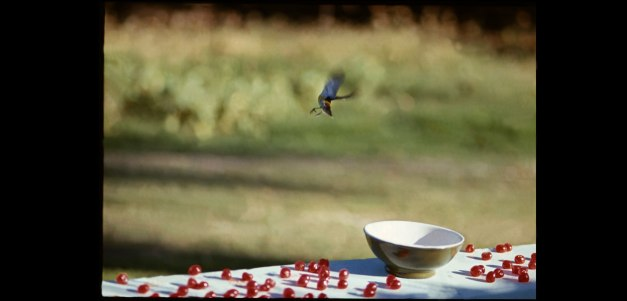 [To Paul, feeding birds cherries, Antigua, 1969- Linda McCartney]