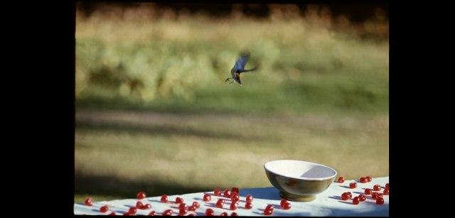 [To Paul, feeding birds cherries, Antigua, 1969- Linda McCartney]