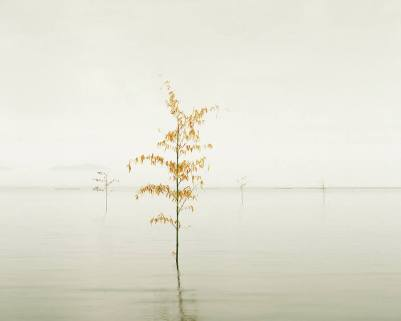Orange Leaves - David Burdeny